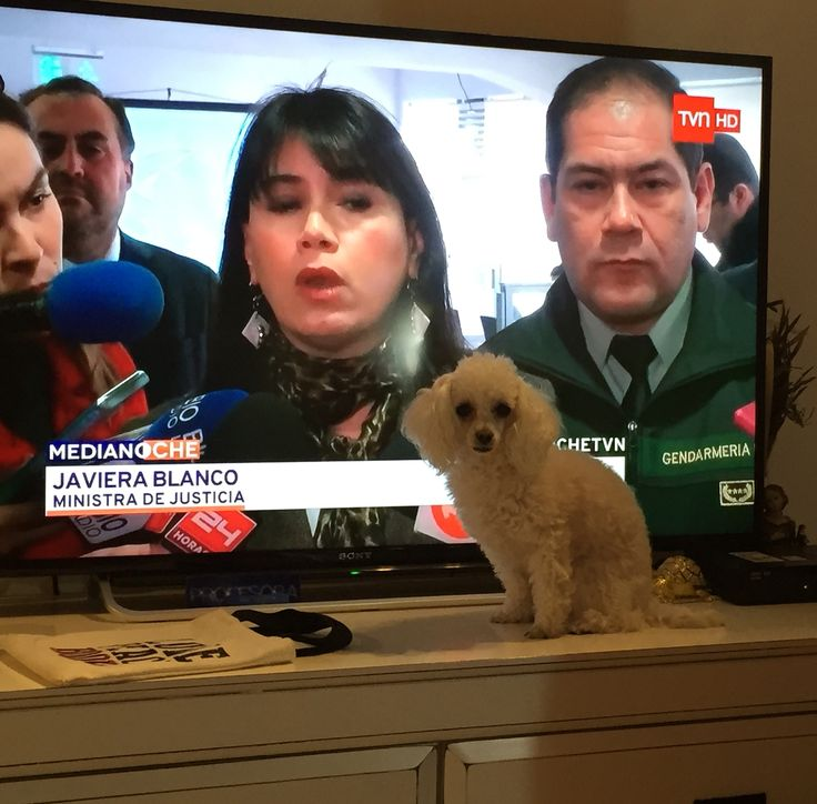 Me quitó la tele para que la mirara :)
