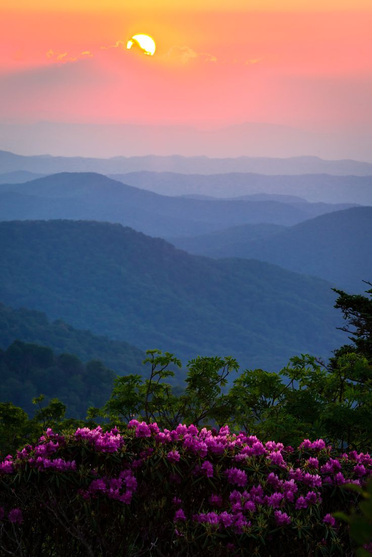 Incredible sunsets are one of the many rewards of hiking along the Appalachian Trail, a national scenic trail that stretches from Georgia to Maine. Native to the Appalachian Mountains, rhododendrons bloom in this gorgeous photo that was taken along...