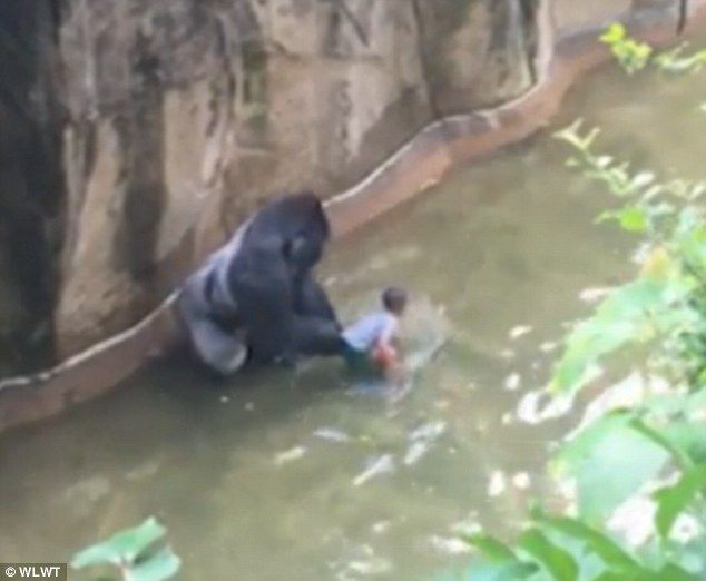 Video footage has emerged revealing some of the chilling moments of the time the boy was i...