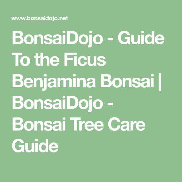 BonsaiDojo - Guide To the Ficus Benjamina Bonsai | BonsaiDojo - Bonsai Tree Care Guide