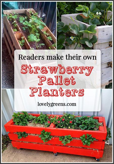 Readers use Lovely Greens DIY instructions to make their own Strawberry Pallet Planters