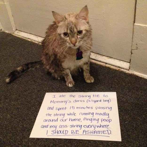 Best Cat Shaming Ideas On Pinterest Kittens Cutest Baby - 21 cats proving make best dog blankets