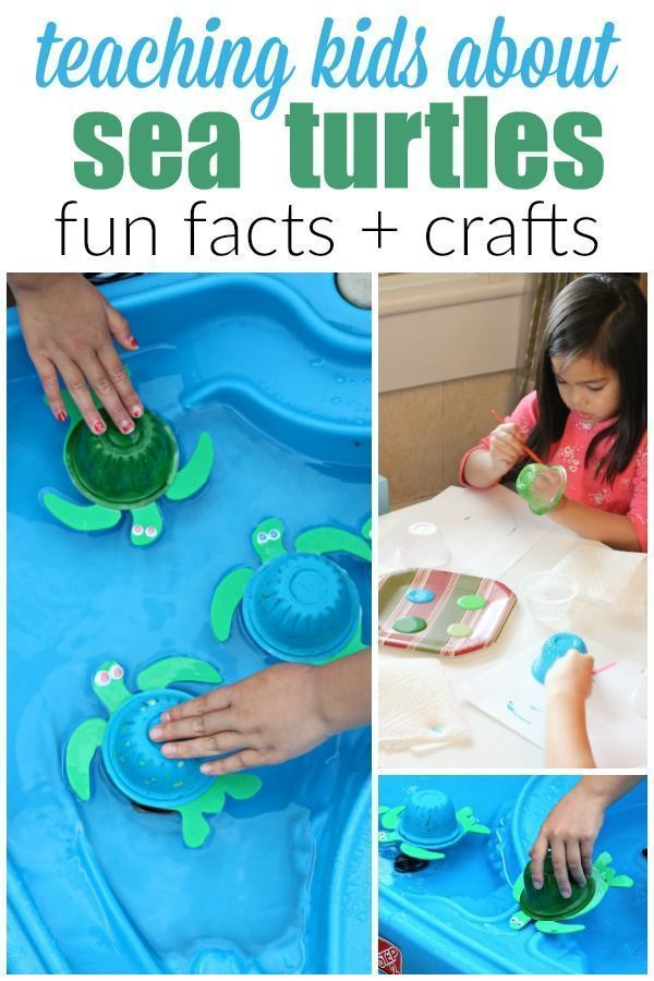 The best way to teach your children about endangered animals is to get hands on! Check out these 10 fun sea turtle facts for kids plus how to make your own sea turtle craft that floats!