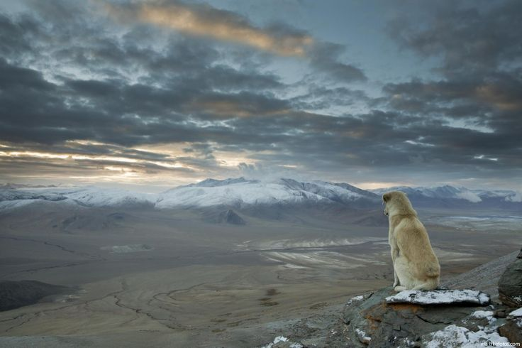 Olhando para os Himalaias desde um pico de 5.000 metros pela vista de um cão.
