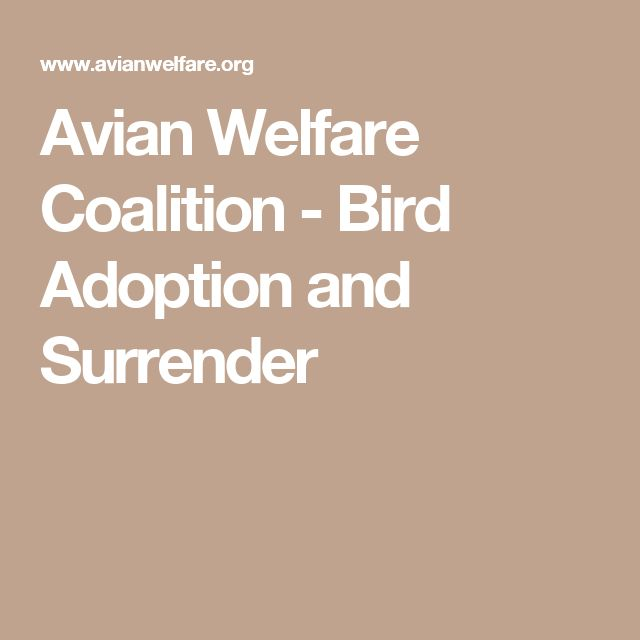 Avian Welfare Coalition - Bird Adoption and Surrender