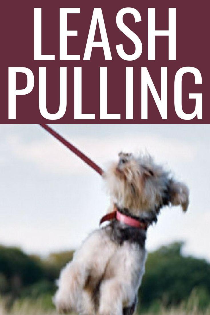 Leash Pulling Dog Training Tips Rope Dog Leash Basic Dog Training