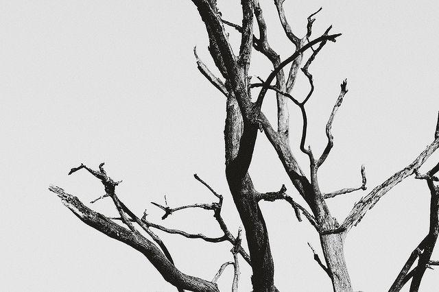 Bones | Flickr - Photo Sharing!