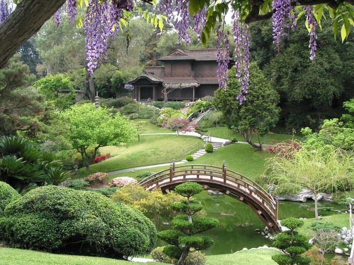 Wisteria Frames The Japanese Garden In Springtime At The Huntington  Library, Art Collections, And Botanical Gardens, San Marino, California.
