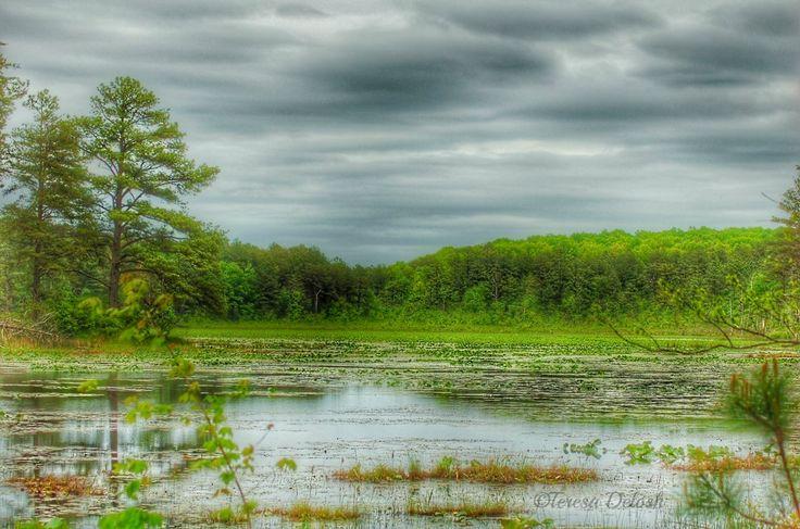Ruffins #Pond A P Hill #Landscape #Photograph