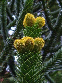 Random Acts of Gardening: Spiky Plants
