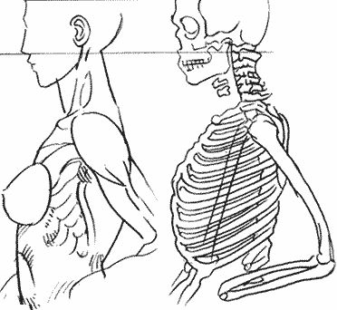 Женская грудь - форма груди - размер груди - большая грудь - рисование груди