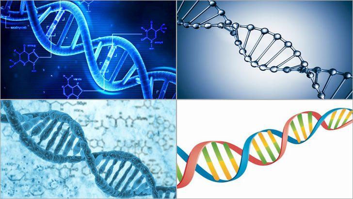 DNA veya tam açılımıyla Deoksiribo Nükleik Asit, virüslerin bir kısmının ve tüm organizmaların biyolojik gelişmeleri ile canlılık işlevleri için gerekli olan ve genetik talimatlar taşıyan nükleik bir asittir. DNA'nın esas rolü, bilginin uzun süreli olarak saklanmasıdır.
