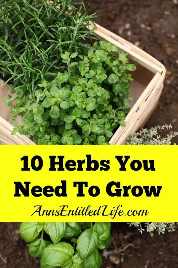 10 Herbs You Need To Grow