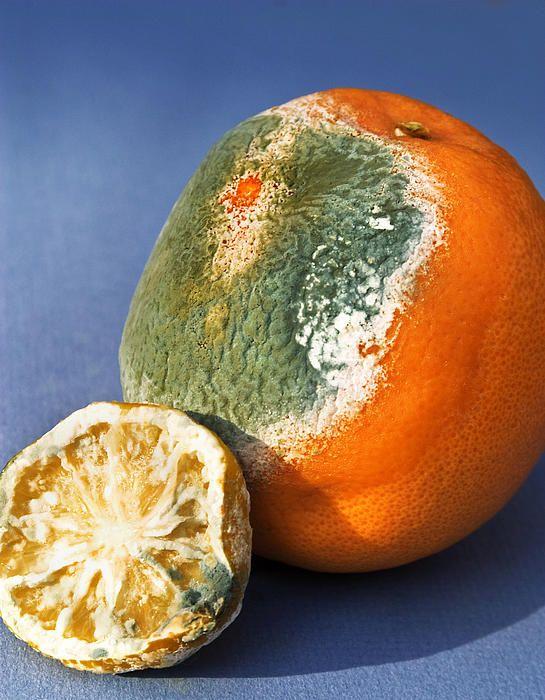Rotten citrus