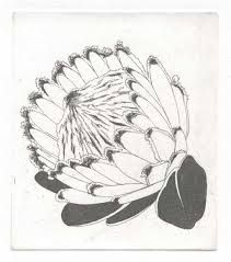 Image result for protea flower drawing