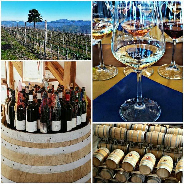 Reposted from @giordanosyrako  #vino #wine #etna #winelover #instasicily #igsicilia #vineyard #sicily #winery #vigneto #winerytour #gambinovini #winetasting #winetourism #vinery #cellar #grapewines #whatsicilyis #igcatania #igsicilia #igsicilia #winemakers #ilovewine #wineoclock #grapevines  Accadeva un anno fa: visita in cantina #gambino al conseguimento del secondo livello corso sommelier...1 year ago: conclusion of second level of #sommelier course at #cantinegambino #gambinovini #vine…