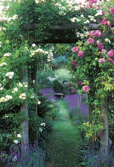 fab u lous! Roses and lavender can' t be beat for romance in the garden