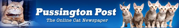 THE PUSSINGTON POST.  Great online 'newspaper' for the cat lover.  Great articles, advice and product recall info.