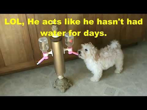 Free Standing Pet Water Bottle Holder - YouTube