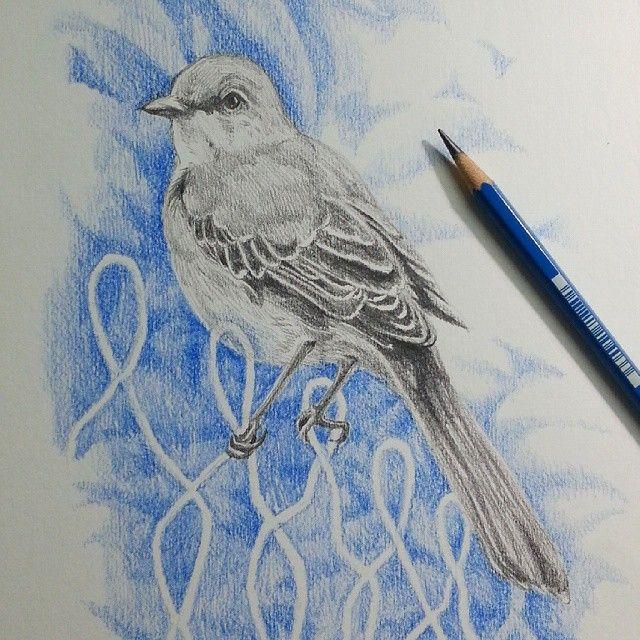 Mocking bird. #drawing #draw #mockingbird #art #sketch #pencil #pencilcolor…