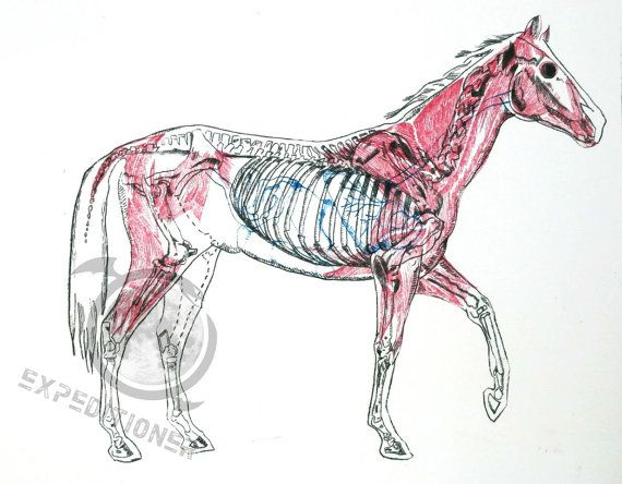 Horse Study  Intaglio Etching Art Print 8 x 10 by Expeditioner, $20.00
