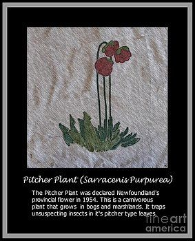 Barbara Griffin - Pitcher Plant