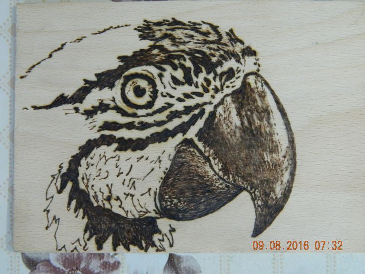 Parrot Papagei Papagal