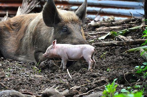 15 lecciones que podemos aprender de las madres del reino animal | Blog de BabyCenter