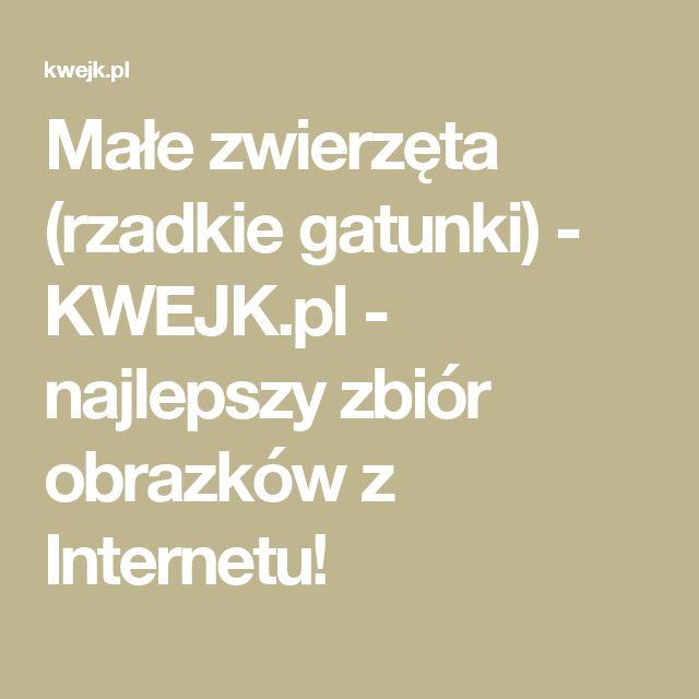 Małe zwierzęta (rzadkie gatunki) - KWEJK.pl - najlepszy zbiór obrazków z Internetu!