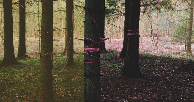 The portfolio of Woodland Mills fine art photography. Martin Larsen Christianshavn @portfoliobox