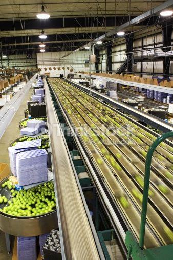 Stock Photo : Apples on conveyor belt