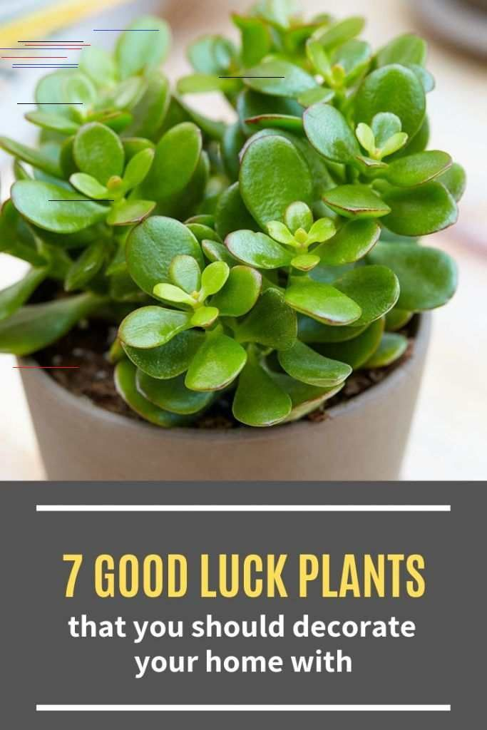 7 Good Luck Plants That You Should Decorate Your Home With 7 Good Luck Plants That You Should Decorate Your Home With