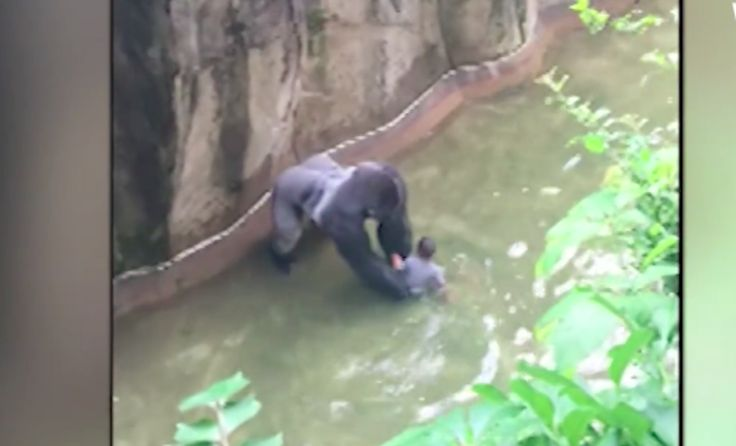Mom's Frantic 911 Call From Gorilla Zoo Exhibit: