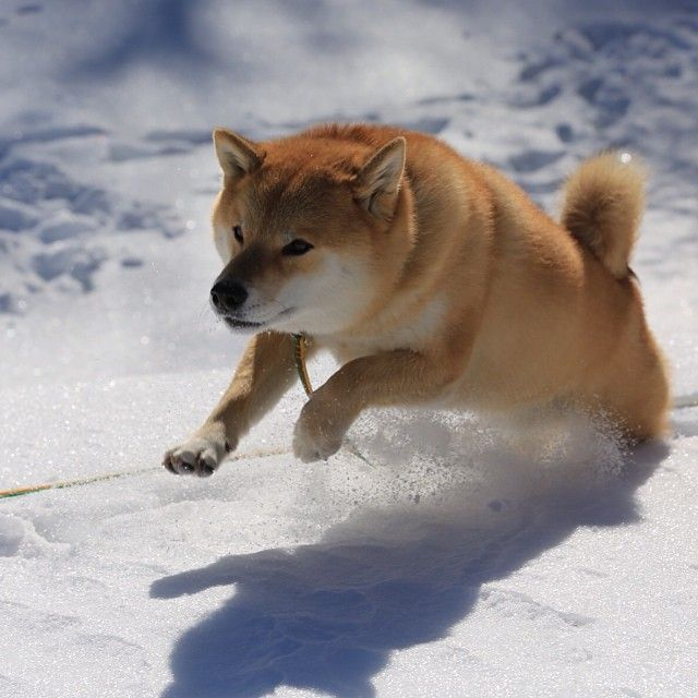 Snow Maru!!