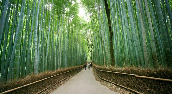 Walk through Arashiyama's famous bamboo grove