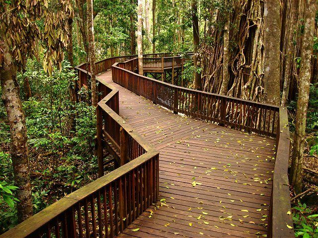 Curtain Fig Boardwalk by Richard Fnq - This Curtain Fig Tree is located just outside of Yungaburra, which is about an hours drive inland from Cairns, Queensland, Australia.