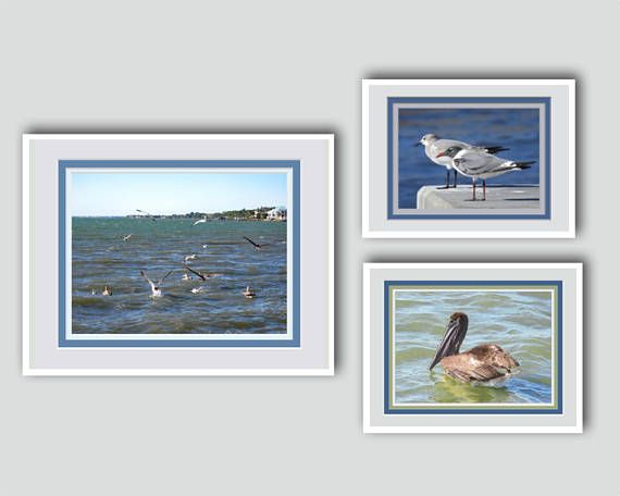 Shore Bird Wall Grouping Gift for Father's Day, Anniversary, Birthday. Fine Art Photos. Printed Faux Mats. Frame Ready. Special Price For 3.