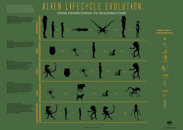 Evolution of the Alien Infographic: From Prometheus To Alien: Resurrection - UPDATE [Infographic] ~ The Geek Twins