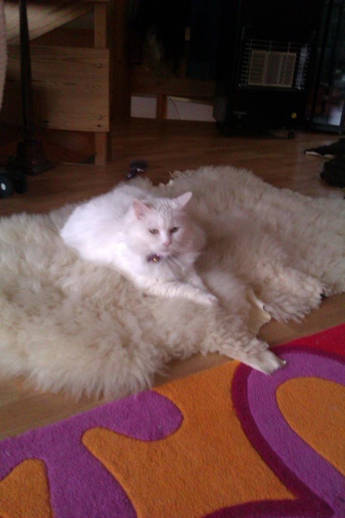 White Amalie on White Wool