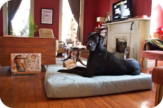Sally Ann: Merry Christmas Zeus - DIY Great Dane Bed