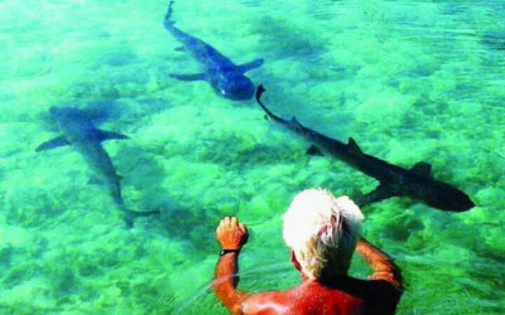 Karimun Jawa, swimming with the shark