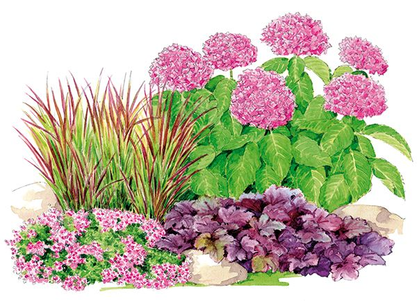 Association hortensia gramin es et heuch res plantes for Association plantes jardin