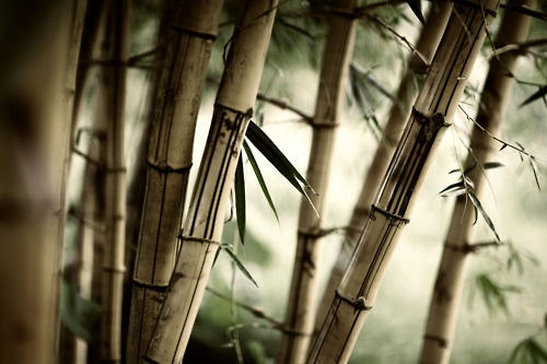 Best of bamboo porn