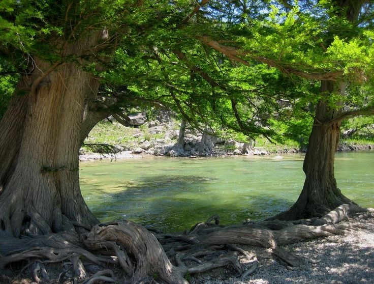 Guadalupe River State Park, Texas    Near Kerriville