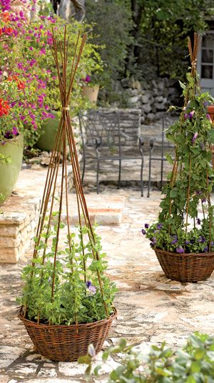 "With the Willow Obelisk, you can grow flowering vines anywhere. Dress up an entryway or patio by planting with sweet peas, black-eyed Susan vine, mandevilla or other compact vines. A liner keeps soil contained. š21"" dia. x 61"" H. Holds š24 quarts. of planting mix."