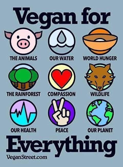 Reasons for going vegan.