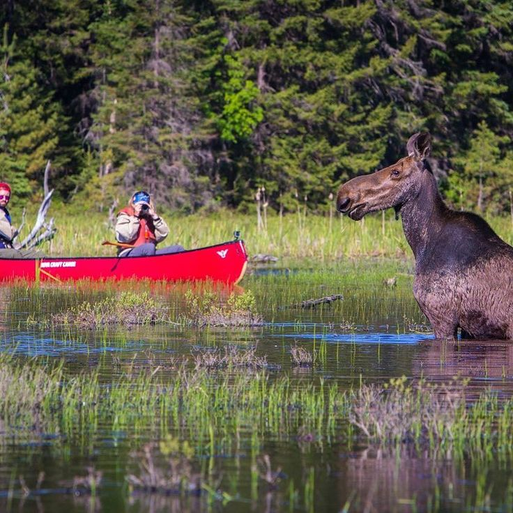 Where was this uniquely Canadian moment captured? Algonquin Park of course!