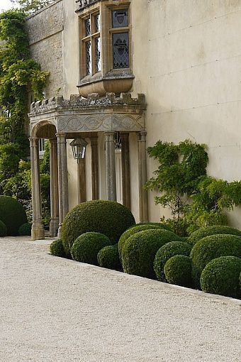 Cloudy boxwood. Landscape design by Jake Hobson.