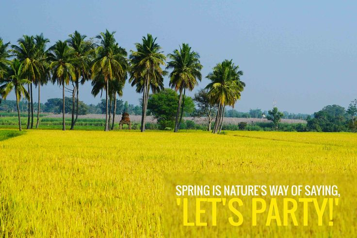 Spring is nature's way of saying, 'Let's party!' ‪#‎Spring‬ ‪#‎nature‬ ‪#‎party‬