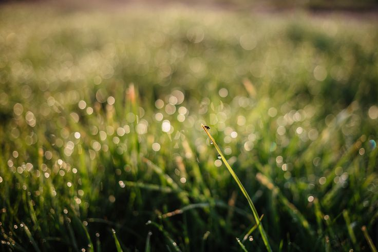 https://flic.kr/p/TBaDcU | Morning dew on the grass | Get more free photos on freestocks.org